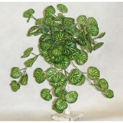 Green Plants & Foliage